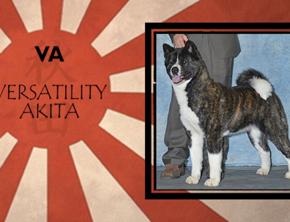 AKC/CKC/UKC CH-RO2 URSA MAJOR's FIELD OF DREAMS BN RE CGCA VA