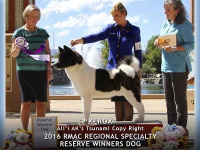 2016 Reserve Winners Dog