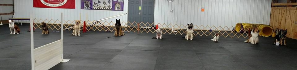 Example of an obedience classes with different breeds at a sit-stay.