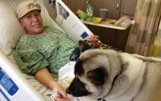 Therapy Akita visiting at the hospital for Our Happy Dogs.