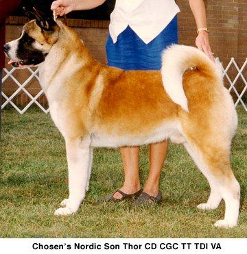 Chosens Nordic Son Thor