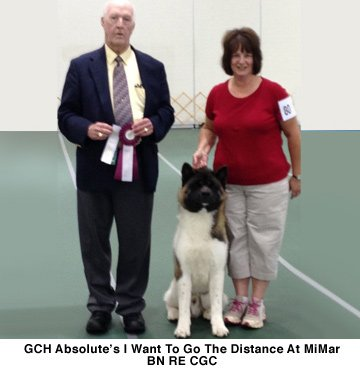 GCH Absolutes I Want To Go The Distance At Mimar