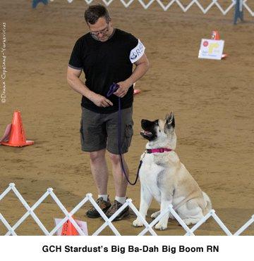 GCH Stardusts Big Ba-Dah Big Boom