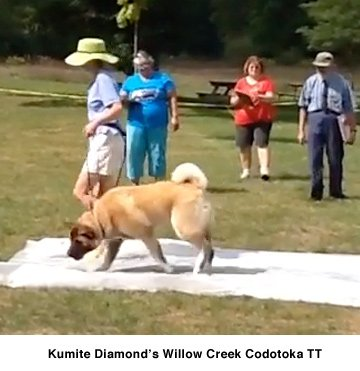Kumite Diamonds Willow Creek Codotoka