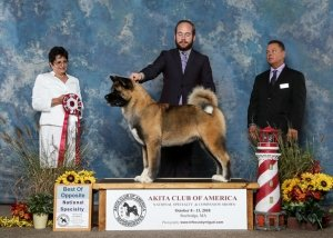 2018 Best of Opposite Sex to Best of Breed.
