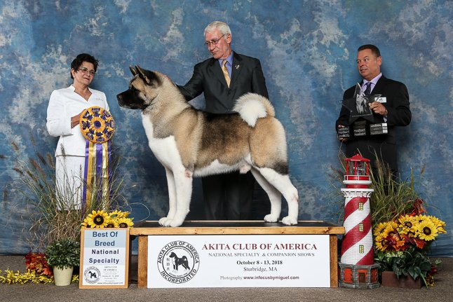 2018 Best of Breed.