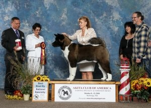 2018 Best Bred By Exhibitor