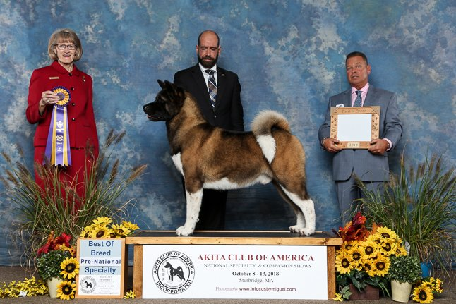 2018 Pre-National Best of Breed