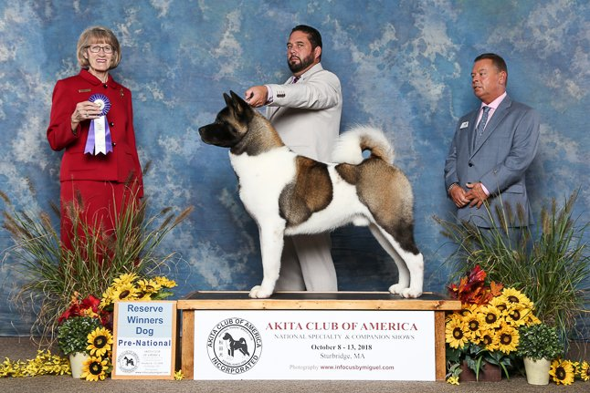 2018 Pre-National Reserve Winners Dog
