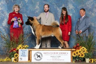 Pre-National Best Puppy/Winners Dog