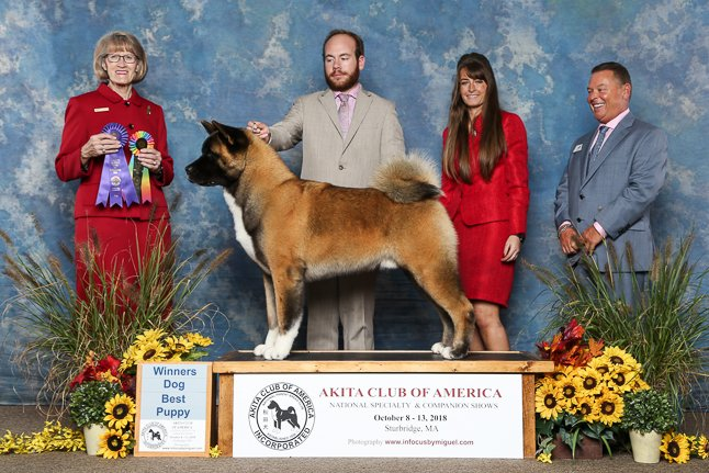 Pre-National Best Puppy/Winners Dog