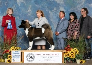 2018 Pre-National - Best Bred By Exhibitor