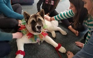 Akita dressed up for Our Happy Dogs.