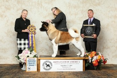 2019 Best of Breed