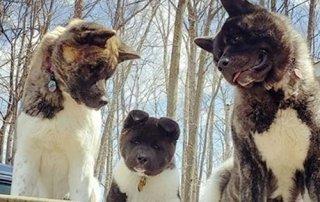 Happy dogs 3